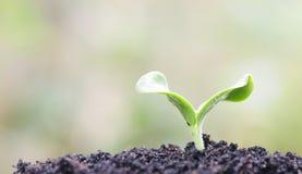 växande växter Arkivfoton