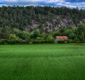 Växande växtgräsplan för åkerbrukt fält arkivfoton