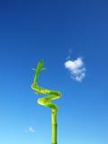 växande växtsky till royaltyfri bild