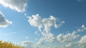 Växande vete mot himlen stock illustrationer
