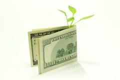 växer pengar Royaltyfri Fotografi