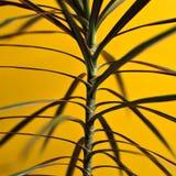 växt Royaltyfri Foto
