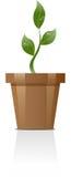 växt Arkivfoton
