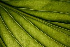 växt arkivfoto
