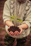 Växt. arkivbilder