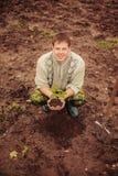 Växt. Arkivfoto