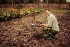 Växt. royaltyfri fotografi