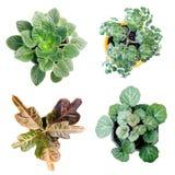 växt 4 Royaltyfria Bilder