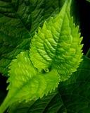växt Royaltyfria Foton