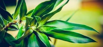 växt Royaltyfria Bilder
