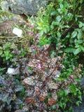 växt arkivbilder
