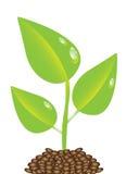 växt Royaltyfri Bild