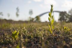 växt Fotografering för Bildbyråer