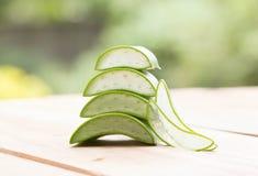 Växt- aloe Arkivbilder