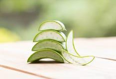 Växt- aloe Royaltyfri Foto