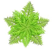 Växt av ormbunkefamiljen på vit bakgrund, vektorillustration Fotografering för Bildbyråer
