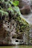 Växt av sjön i Karstlanform Arkivbilder