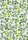 växt av släkten Trifoliumprydnad royaltyfri illustrationer