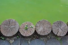 Växt av släktet Trifolium för tre blad på en träjournal bredvid waterbody Fotografering för Bildbyråer