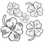Växt av släktet Trifolium lämnar den vuxna färgläggningsidan 5 inklusive sömlösa modeller också vektor för coreldrawillustration Arkivfoton