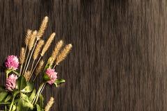 Växt av släktet Trifolium på bakgrunden av trädet Royaltyfri Bild