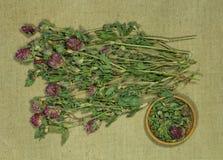växt av släktet Trifolium trefoil torra örtar Växt- medicin, phytotherapy medici arkivfoton