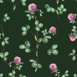 Växt av släktet Trifoliumbakgrund Royaltyfri Illustrationer