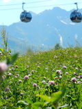 Växt av släktet Trifoliumfält i berg Arkivfoton