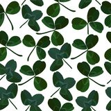 Växt av släktet Trifoliummodell Royaltyfri Foto