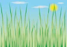 växt- bakgrund Royaltyfria Foton