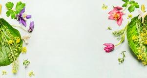 Växt- bakgrund med sommar- eller vårträdgårdblommor och växten, ram royaltyfri fotografi