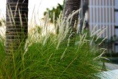 Växt & blomma Fotografering för Bildbyråer