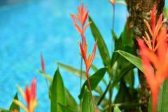Växt & blomma Arkivfoto