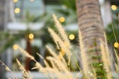 Växt & blomma Royaltyfria Bilder