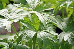 växt- boter för bakgrund Royaltyfri Foto