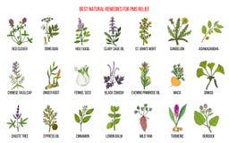 Växt- boter för premenstruell syndrom för PMS vektor illustrationer