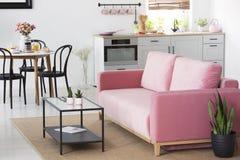 Växt bredvid den rosa soffan i lägenhetinre med stolar på buller royaltyfri bild
