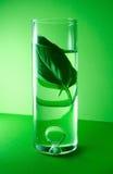 växt- extrakt Royaltyfri Foto