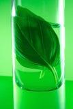 växt- extrakt arkivfoto