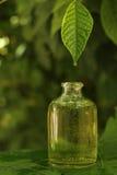 Växt- extrakt Arkivbild