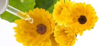Växt- extrakt från ringblommablomman Royaltyfri Fotografi