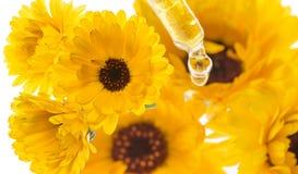 Växt- extrakt från ringblommablomman Arkivfoton