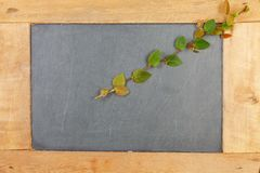Växt för Coatbuttons pålagd mexicansk tusenskönaväxt kritiserabrädet Royaltyfria Foton