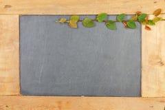 Växt för Coatbuttons pålagd mexicansk tusenskönaväxt kritiserabrädet Arkivfoton