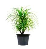 Växt för grönt hus som isoleras på vit Arkivbild