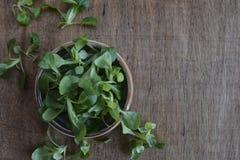 Växt för havresallad, vårklynneValerianellalocusta, valerianasallad på träbakgrund royaltyfria bilder