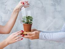 Växt för hem för kupol för begreppsmässig ekologirörelse öppen arkivbilder