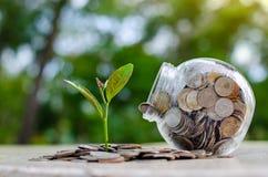 Växt för krus för myntträdexponeringsglas som växer från mynt utanför begreppet för besparing och för investering för exponerings royaltyfri foto