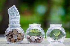 Växt för krus för myntträdexponeringsglas som växer från mynt utanför begreppet för besparing och för investering för exponerings arkivbild
