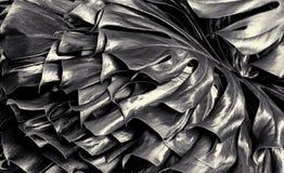 Växt för schweizisk ost i svartvitt royaltyfri fotografi